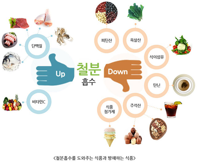 철분흡수 좋은 것 : 단백질, 비타민 등 // 나쁜 것 : 피틴산, 옥살산, 식이섬유, 탄닌, 주석산, 식품첨가제